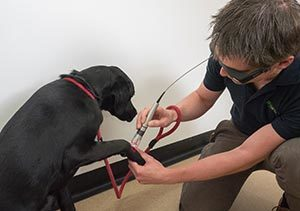 pets-lasertherapy-24