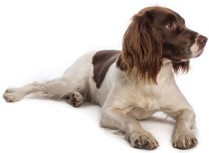 Friars Moor Pet Veterinary Services - Dorset, Somerset and Wiltshire