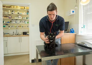 cat and vet in pets consulting room