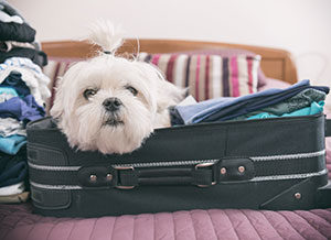 pet passports - dog in suitcase
