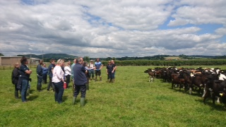 youngstock dairy heifers meeting