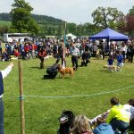 It's all about the dogs at Durweston Country Fayre!