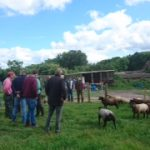 Flock Club meet up to discuss lambing