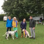 Weather doesn't stop Marnhull dog show success!