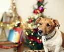 FM Small Animal Care Guide Christmas